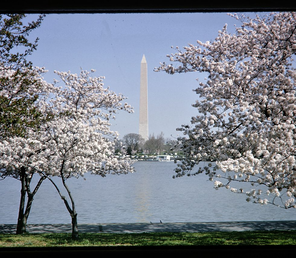 washington monument and trees