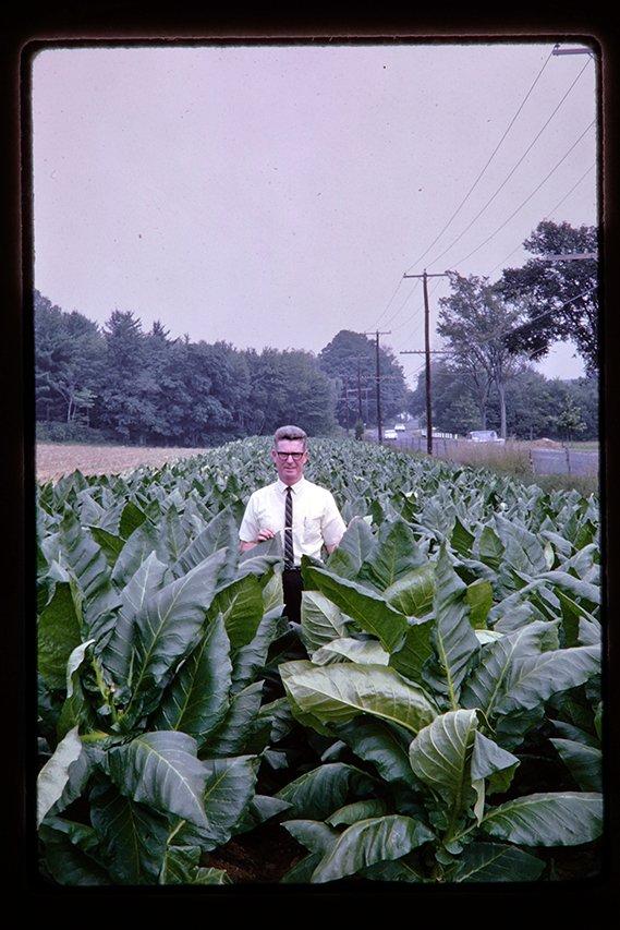 man in a tobacco field