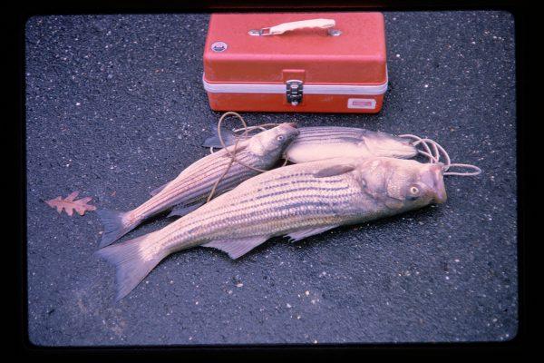 fish and tackle box