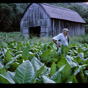 farmer smoking a cigar