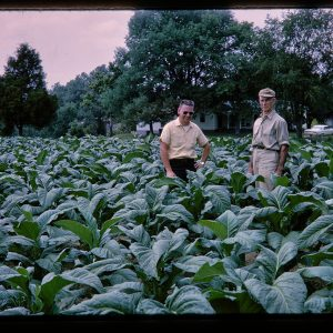 two men in a tobacco field