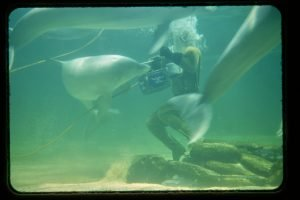 diver feeding dolphins