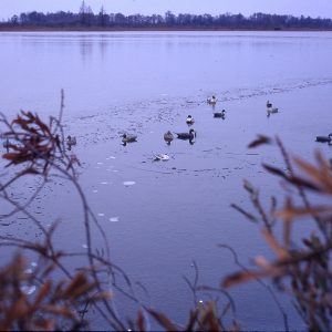 Decoy Ducks 12-29-70