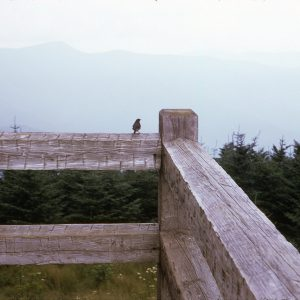Bird on a split rail fence, Mt. Mitchell 8-14-74