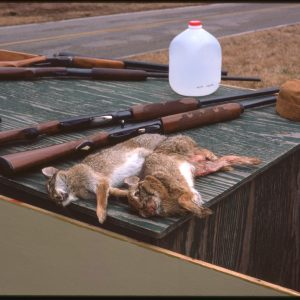 two rabbits and some rifles on plywood crate 1-24-75